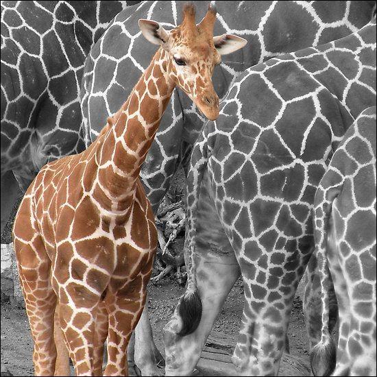 À quel instrument de musique la girafe est-elle associée ?