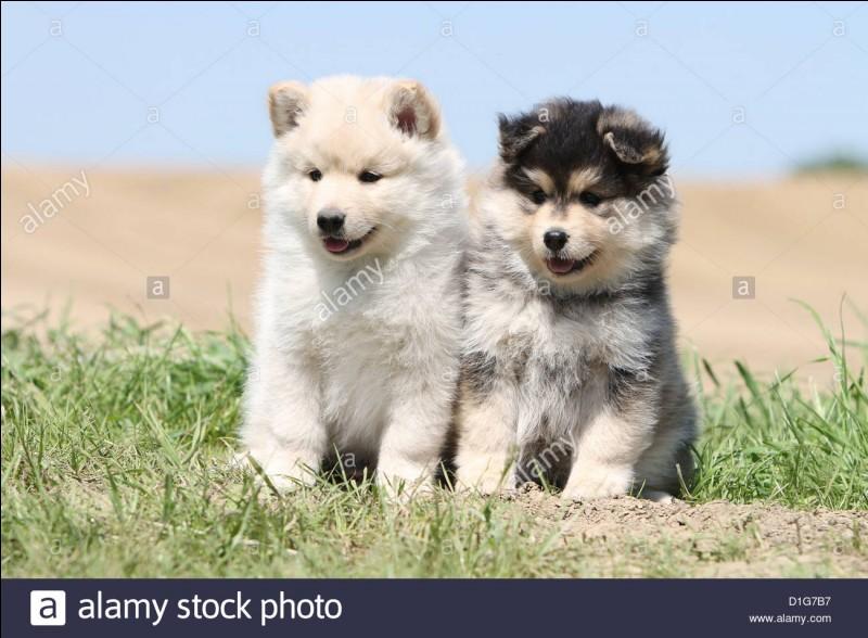 Comment s'appellent ses deux chiennes ?