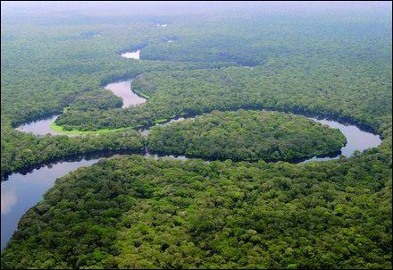 Quelle est la taille de la forêt du bassin du Congo ?