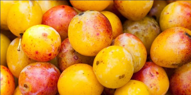 Les fruits que nous apercevons sur cette photo sont des Mirabelles.