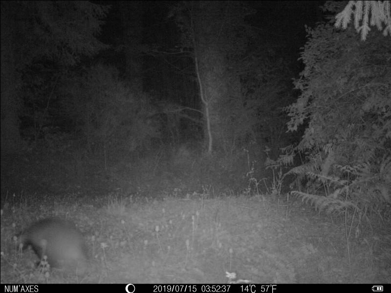 Photo prise de nuit dans le Tarn, identifiez l'animal !
