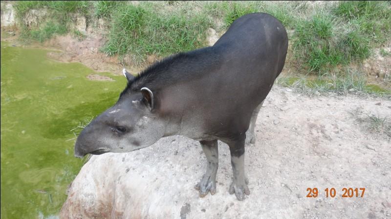 Toujours en Guyane, identifiez l'animal !
