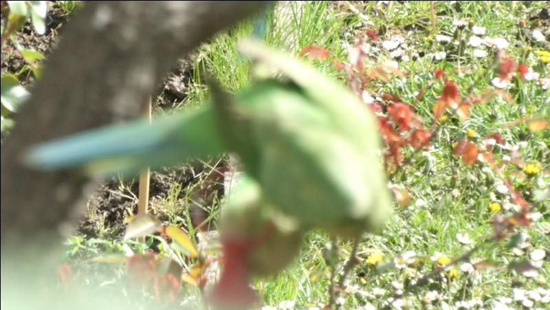 Photo prise dans le Val-de-Marne, quel est cet oiseau ?