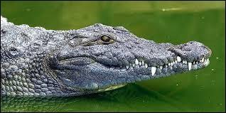 Les larmes de crocodile sont...