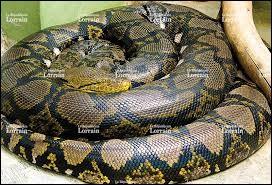 Quel est le plus long serpent du monde ?