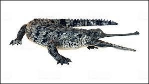 Le gavial mange uniquement des poissons.
