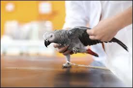 Bien qu'équipé d'ailes, un de ces oiseaux est incapable de voler. Lequel ?