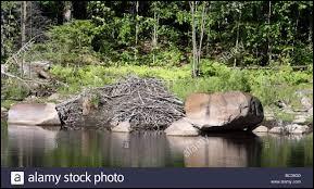 L'habitat du castor s'appelle ...