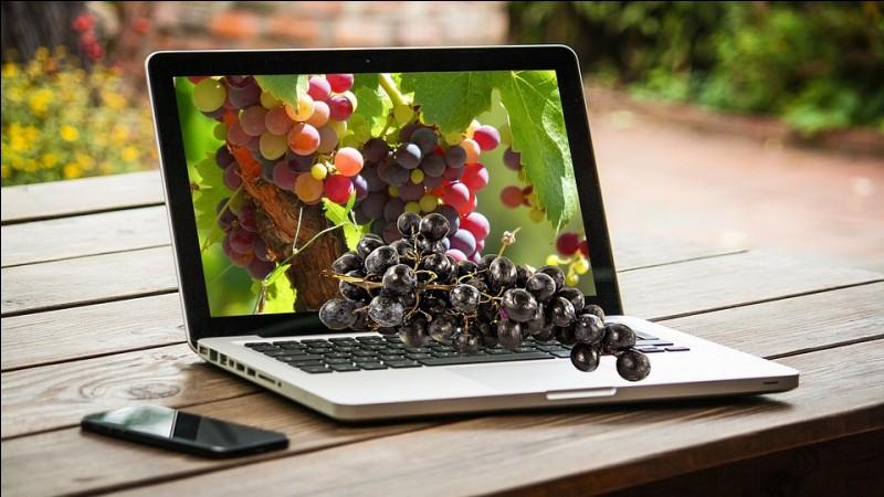 Comment appelle-t-on la culture de la vigne ?