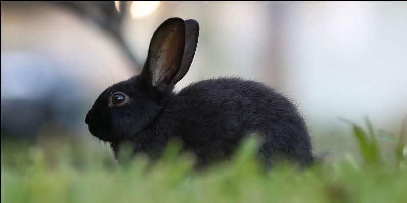 Combien de doigts possède le lapin en tout ?