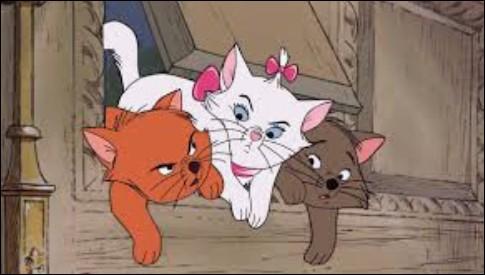 Les 3 chatons de Duchesse sont...