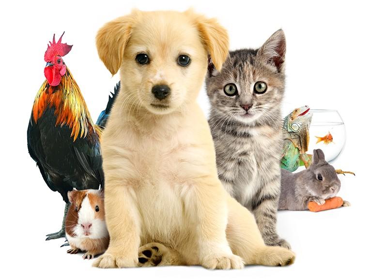 Si tu étais un animal, lequel serais-tu ?