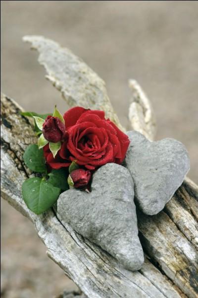 """Qui interprétait les paroles """"Puis il mourut dans la nuit même, sans un adieu, sans un je t'aime"""" ?"""