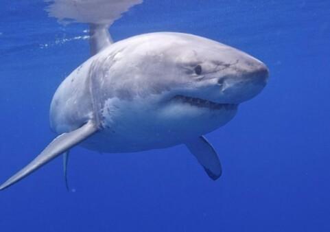 Les requins (part 1) facile