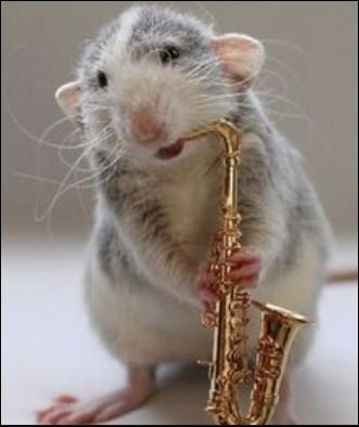 Quel est le nom du saxophoniste ?