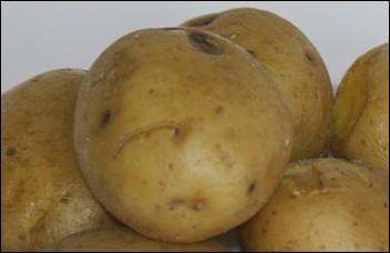 Quel est le nom donné à une pomme de terre cuite et servie avec sa peau ?