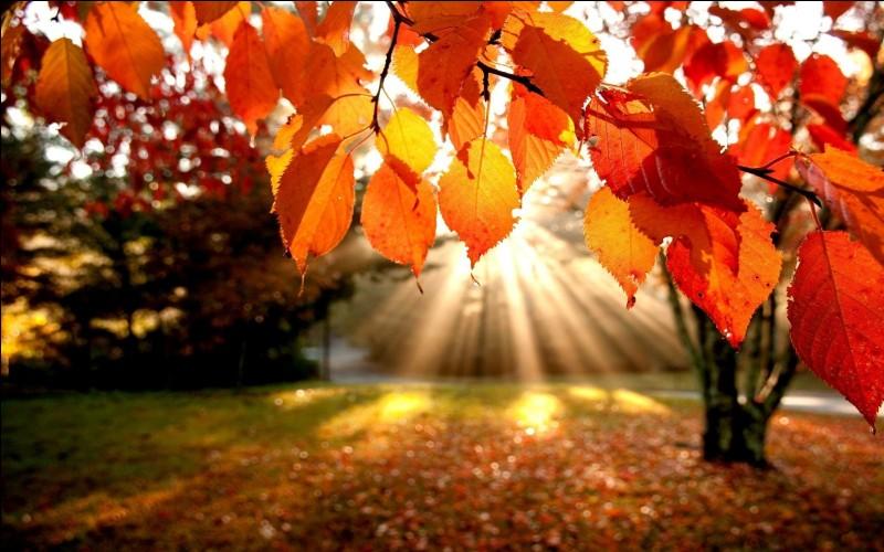 L'automne commence au début du mois d'octobre.