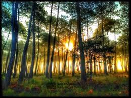 Jour 9 : besoin d'air frais ! Je cours rejoindre le département où se trouve la plus grande forêt de France. Lequel est-ce ?