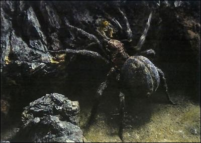 """Espèce : Animaux Famille : Enfant d'UngoliantDescription : Grandes cornes, yeux impitoyables, gigantesqueÀ savoir : Appelé par Sauron """"Sa chatte"""" Quel est ce personnage ?"""