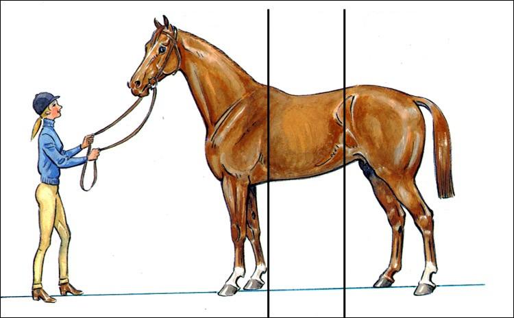Quelles sont les trois parties du cheval ?