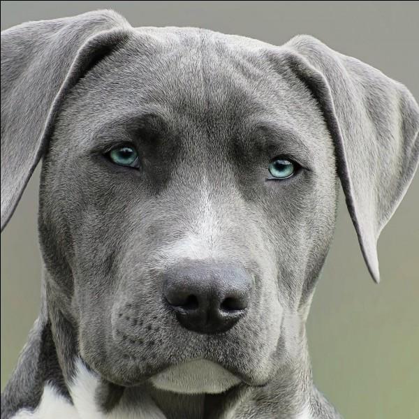 En moyenne, quelle est l'espérance de vie d'un chien ?