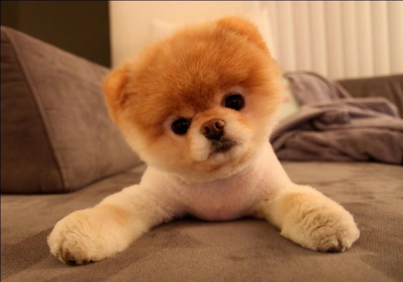 Comment s'appelle ce chien qui a attendu pendant dix ans le retour de son maître devant une gare au Japon ?
