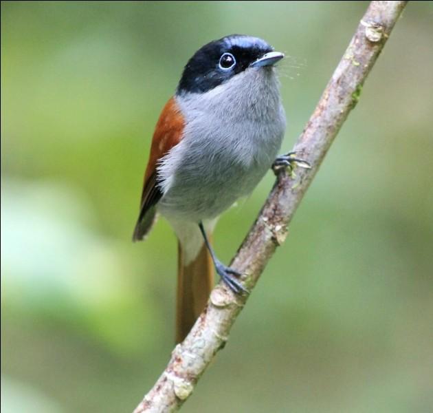 Ton pire ennemi a extrêmement peur des oiseaux, quel sortilège lui lances-tu ?