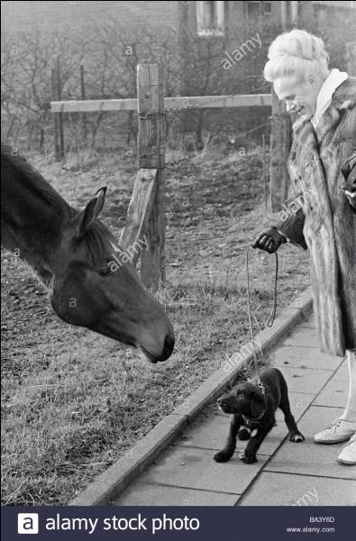 Les foyers français se sont plus souvent tournés vers le chien dans les années 1970.