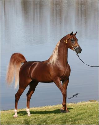 Le cheval fait partie de quelle catégorie ?