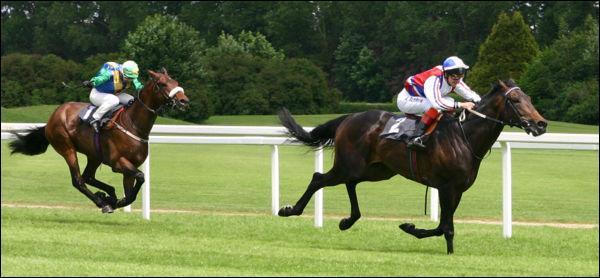 Quelle race de chevaux est la plus rapide ?