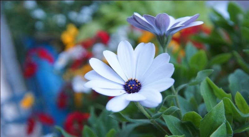 """Comment dit-on """"une fleur"""" ?"""