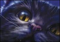 Quel chat est représenté ici ?