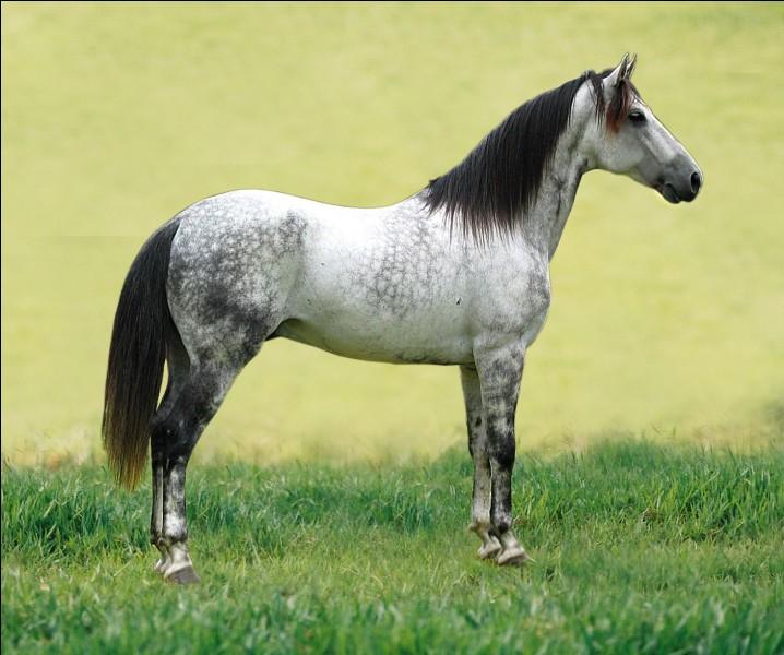 Complète la phrase : ''Quand on tombe de cheval...''.