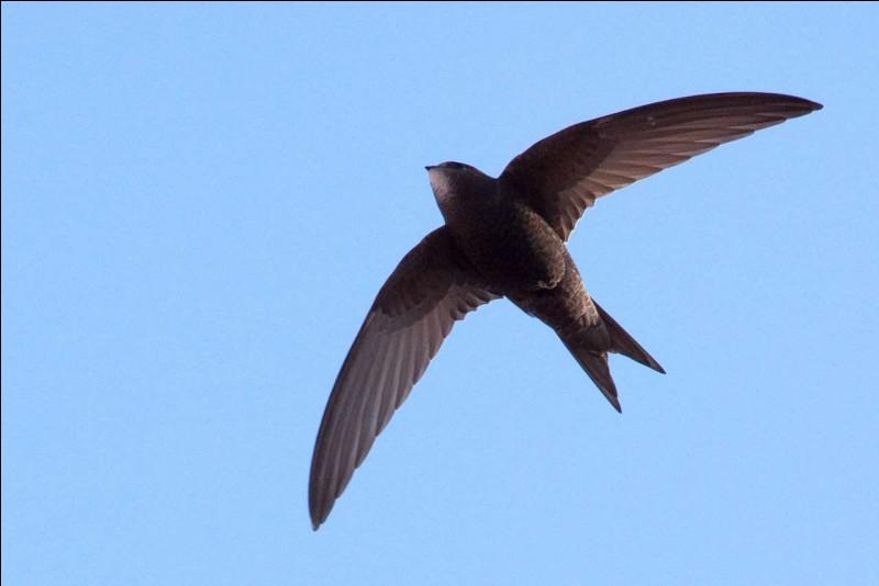 Son nom est le surnom que l'on donne a un oiseau. Trouvez son prénom !