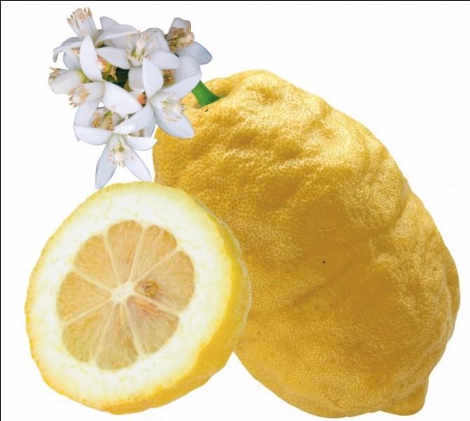 Quel est le nom de cet agrume jaune ?