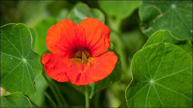Et pour finir quelle est cette fleur ?