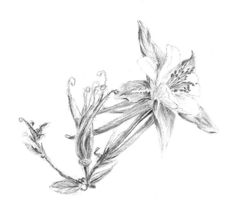 Les fleurs en images