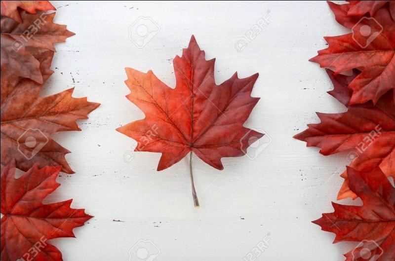 Quel arbre est le symbole du Canada ?