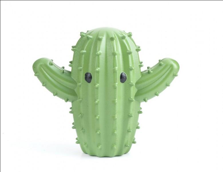 """À qui devons-nous la chanson """"Les cactus"""" ?"""