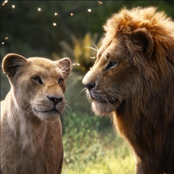 Le lion est le seul félin à vivre tout le temps en famille.