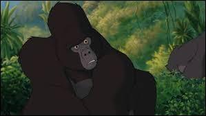 Quel est le nom de ce gorille ?