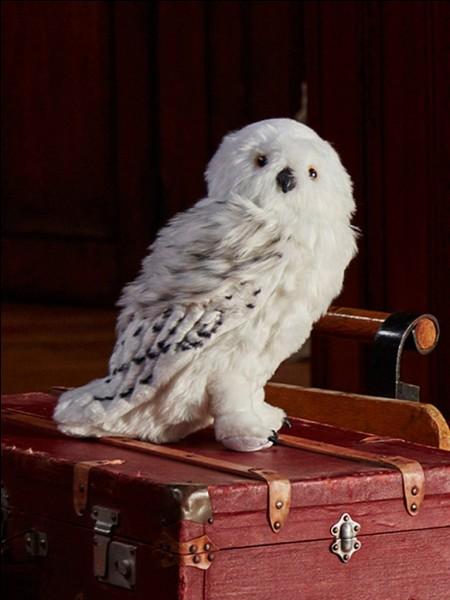 Comment s'appelle la chouette d'Harry Potter ?