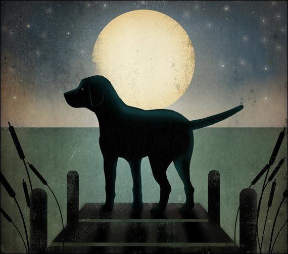 Biscotte est une mamie labrador qui, avec l'âge, doit se soulager plus souvent que dans sa jeunesse. Ses maîtres l'ont donc abandonnée sans scrupules car :