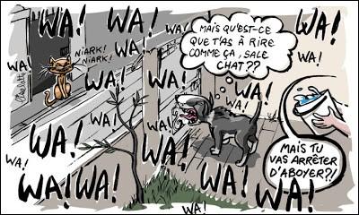 Basenji, magnifique terrier du Congo, vient d'être abandonné pour une raison assez loufoque :