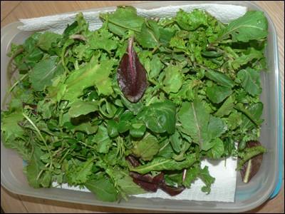 Est-il important de donner des végétaux riches en eau pour un lapin souffrant de problèmes urinaires ?