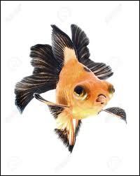 Si j'ai une mémoire de poisson rouge, c'est que ma mémoire est bonne.