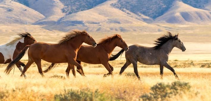 Saurez-vous trouver la race de ce cheval ?