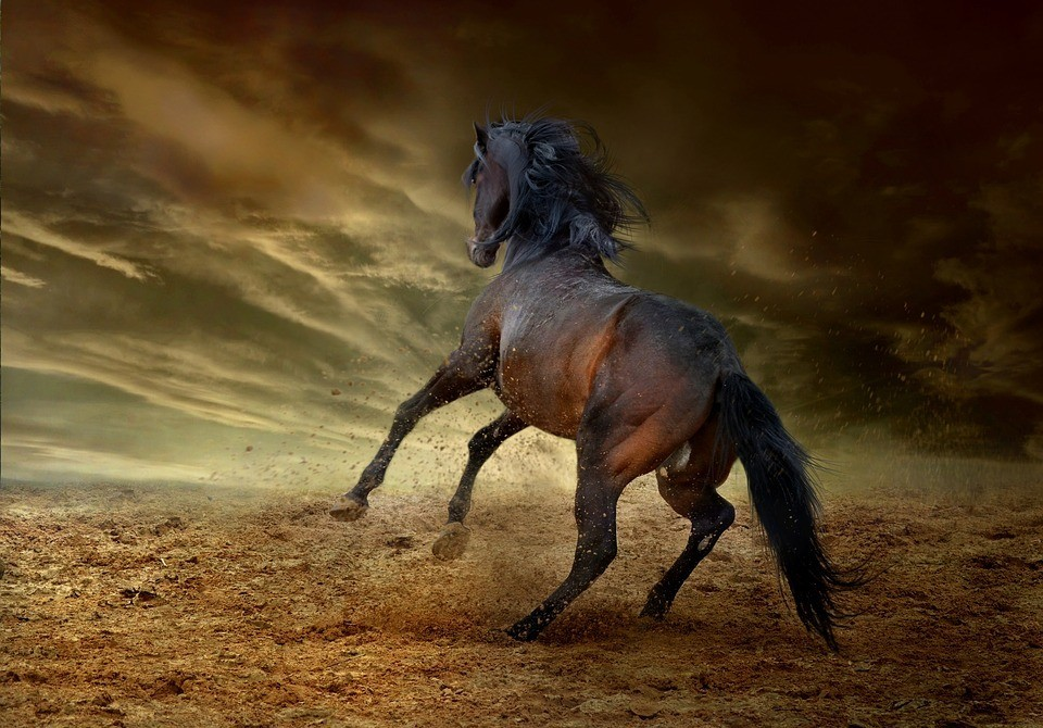 Saurez-vous trouver la robe de ce cheval ?