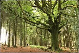 Le forêt de Brocéliande, parfois identifiée à la forêt de Paimpont, se trouve en Normandie.