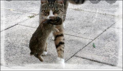 Quel animal le chat préfère-t-il chasser ?